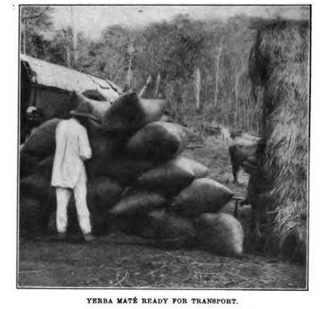 Creative Commons image retrieved from Pan American Union. (1916).  Yerba mate: the tea of South America ...  Washington: Govt. Print. Off.