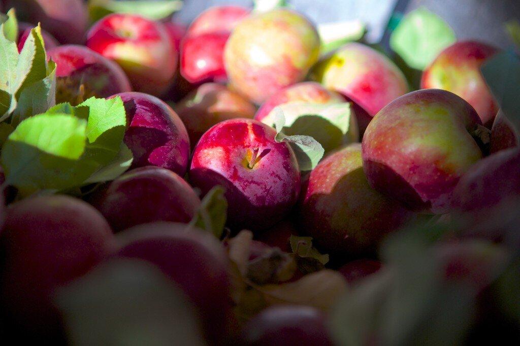 Photo Courtesy of Apple Acres