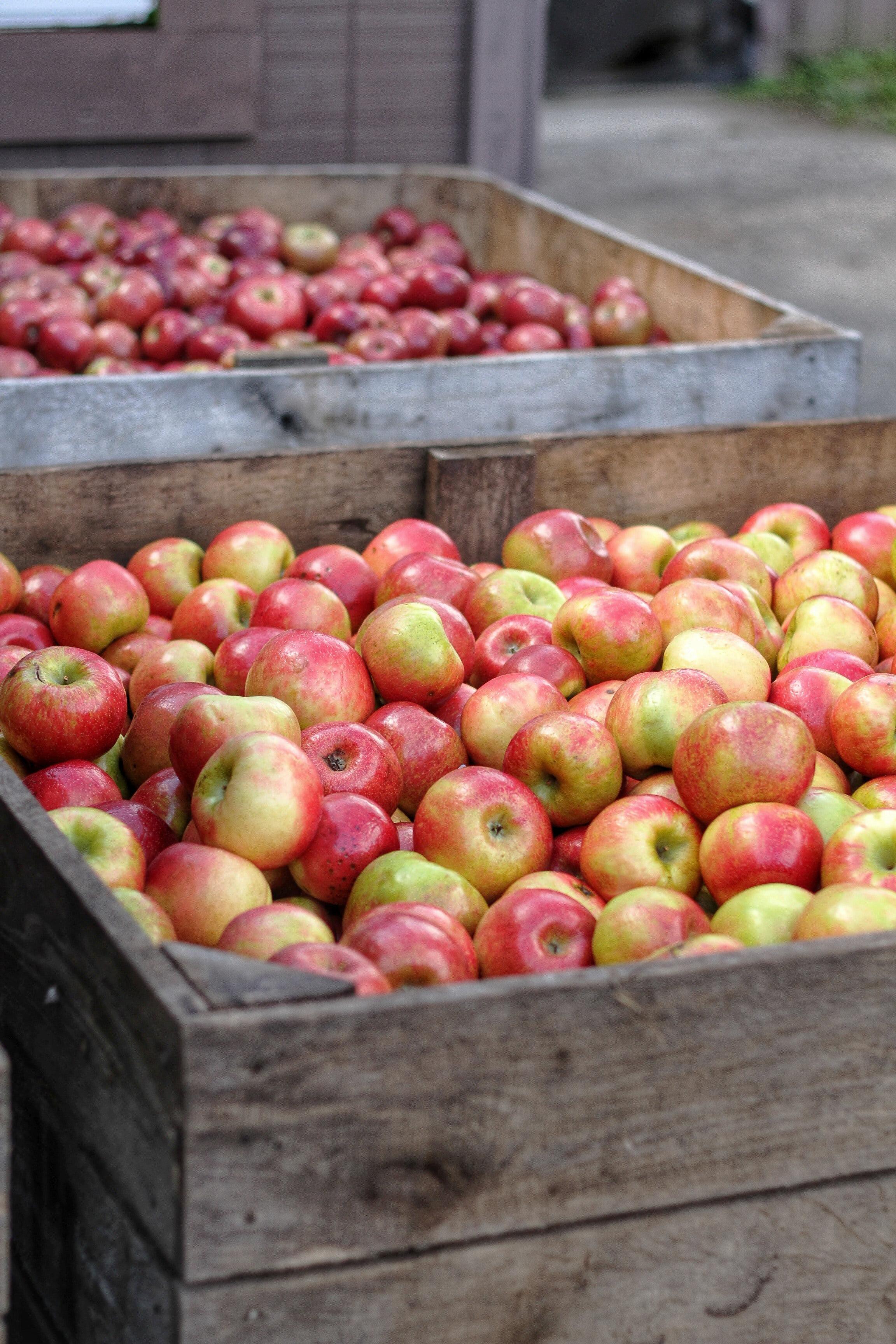 crates of apples edited.jpg