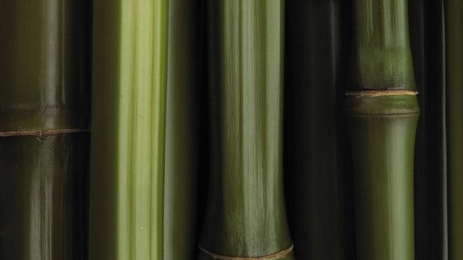 bamboo_texture1591.jpg