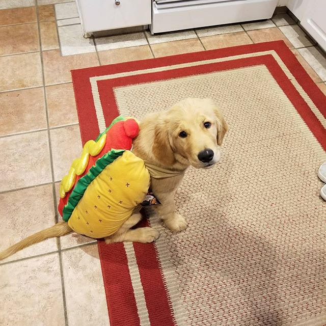Squad Mascot does not like his costume because he can't eat it.