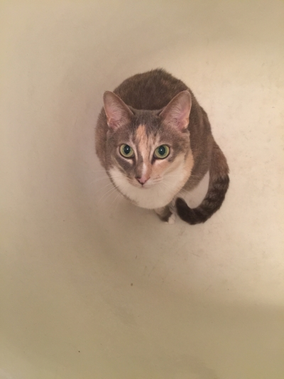Catalina, the kitty who adopted us and then insisted on coming along to Mexico. This is part of her bathtub series.