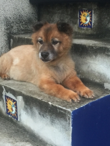 Here's Ulysses hanging out on the stairs leading to the  mirador  at our second house in Merida in the  colonia  of Chuminopolis. In this photo, taken a year ago (2016), he was 19-years-old. He truly does amaze as he runs through the house and yard like a puppy. His selective hearing works better than mine. He has also earned some pretty important roles in several of my books.