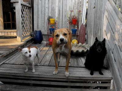 The kids at Alligator Point: Pablo Neruda, Murmur Lee, and Scout. Scout was a schipperke who passed away at the ripe old age of 20. He was a jokester, always full of good humor.