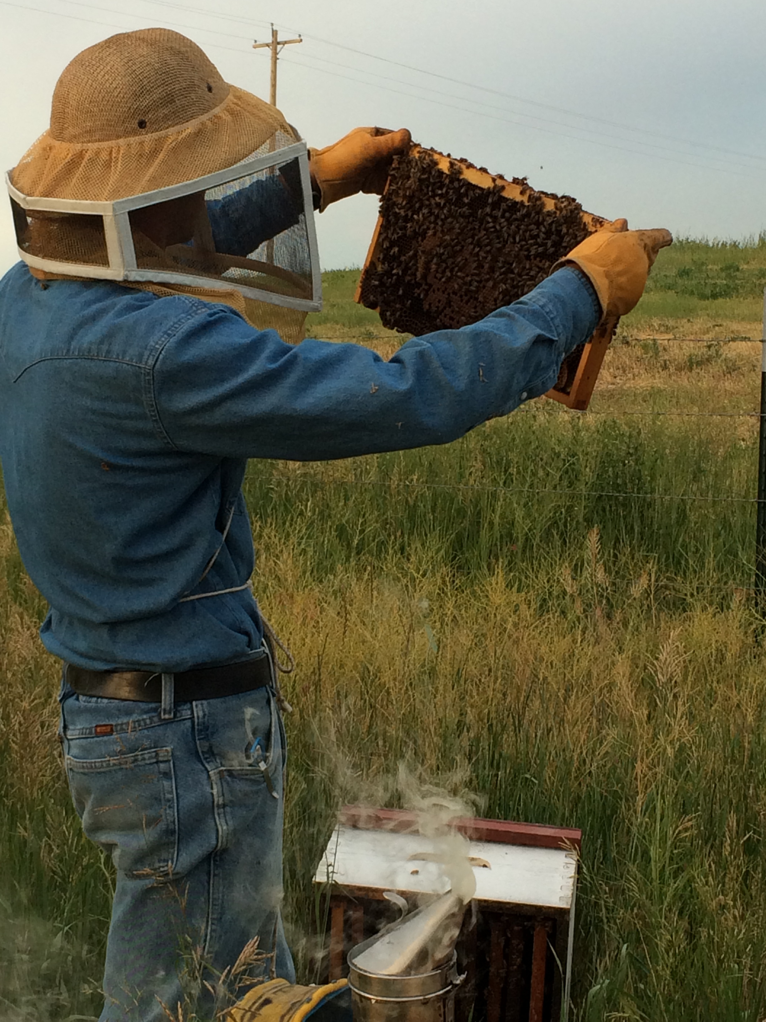 Ben checking how healthy the bees are.