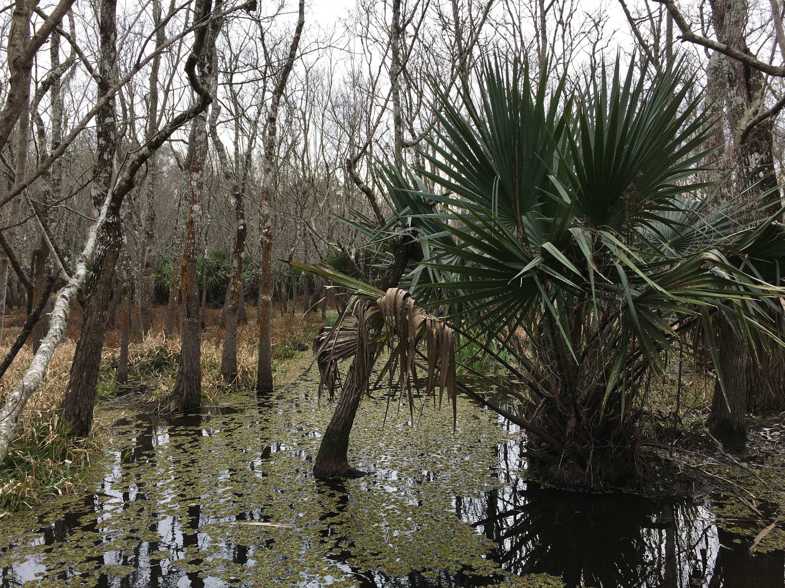 swampwater.JPG