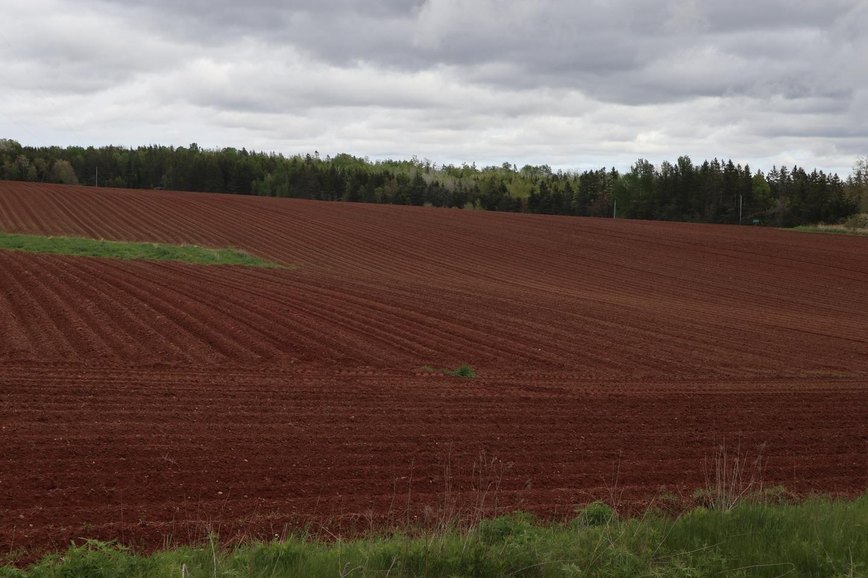 bpei field.JPG