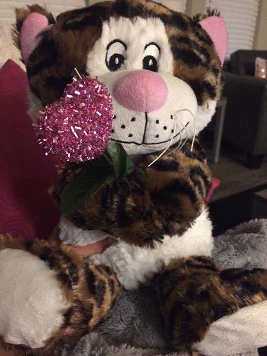 Example of the stuffed animals given to our organization by PetSmart! - We turned them from Christmas themed to Valentine's themed for the fundraiser.