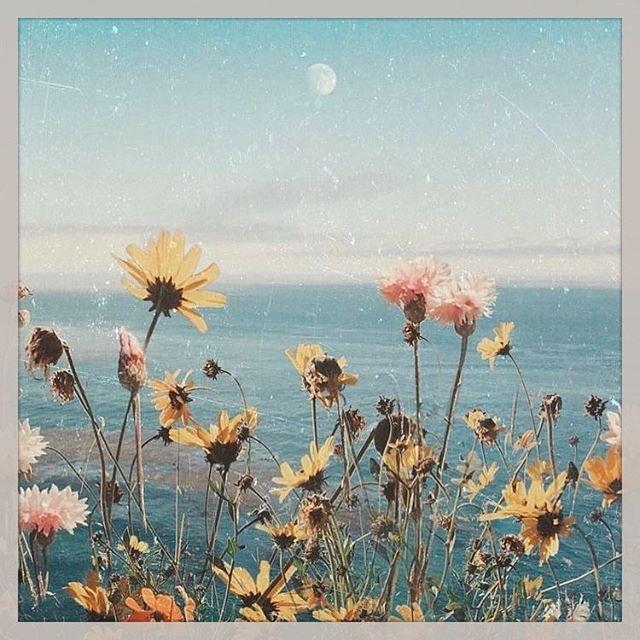 Moon children welcomed! 🌕🌸🌼🌻 #moonchild #flowerchild #wildflower #california