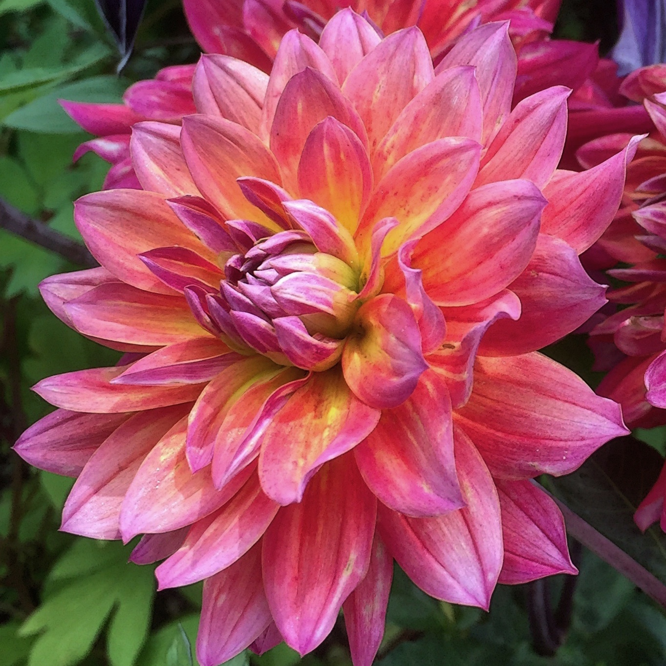 Flower Blooms for each season
