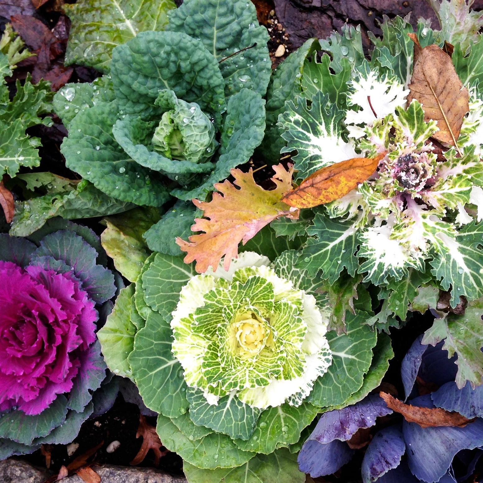 Fall Flower Garden Ideas