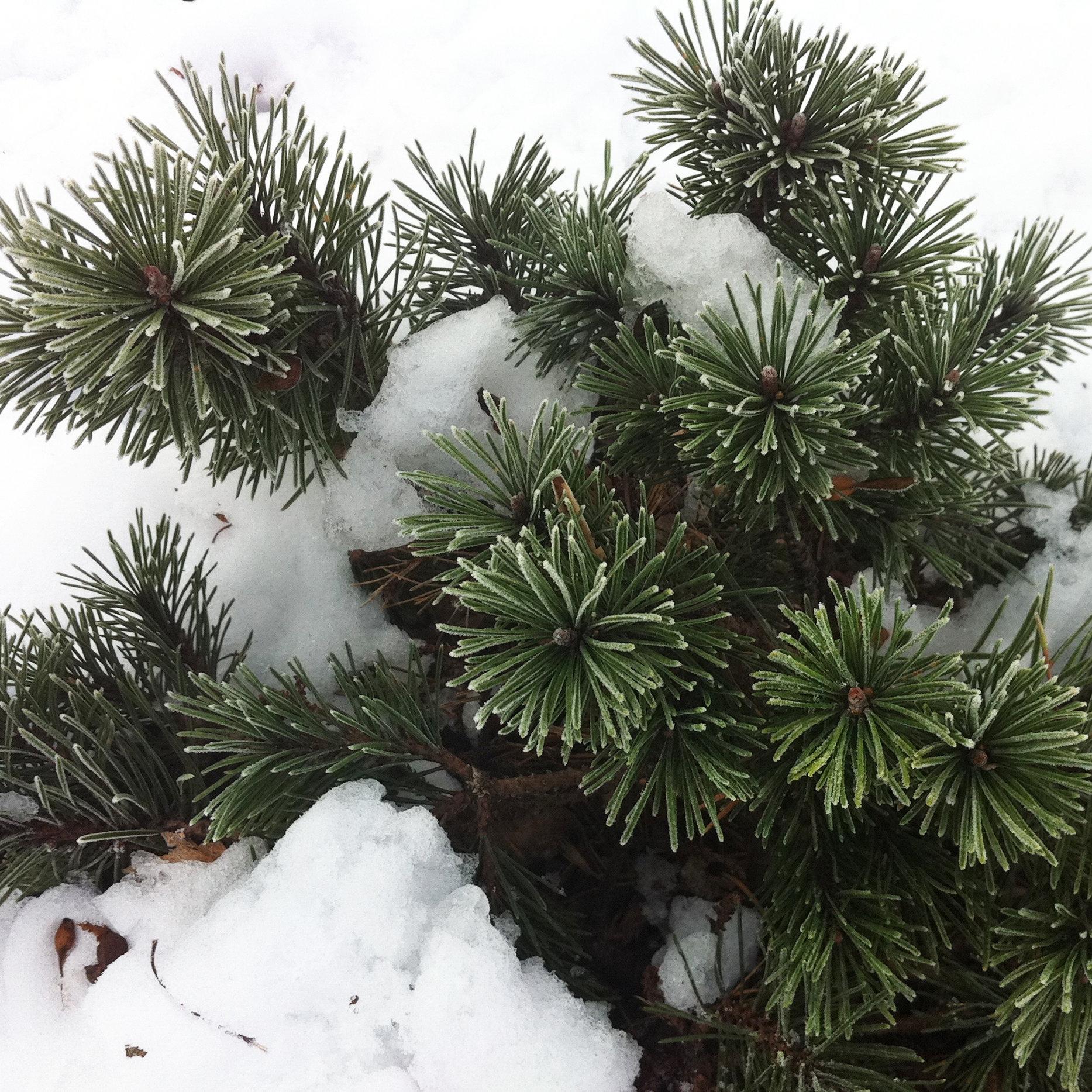 Winter Landscape Design.