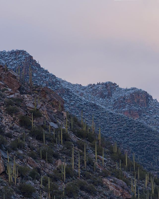 So I know I've been gone for quite some time without posts but that's not because I've been idle but rather because I've been practicing! Here are some photos of early January when it snowed a lot near Tucson and so a trip to the Sabino Canyon was irresistible! More photos to come! __________________________________  #snow #snowyarizona #sabino #canyon #sabinocanyon #sunset #mountain #mountainsunset #cacti #saguaro #tucson #coldweather #colors #panorama #meltingsnow #nikon #d7200 #southweststorytellers #cloud #cloudymountains #snowyclouds #pastelcolors