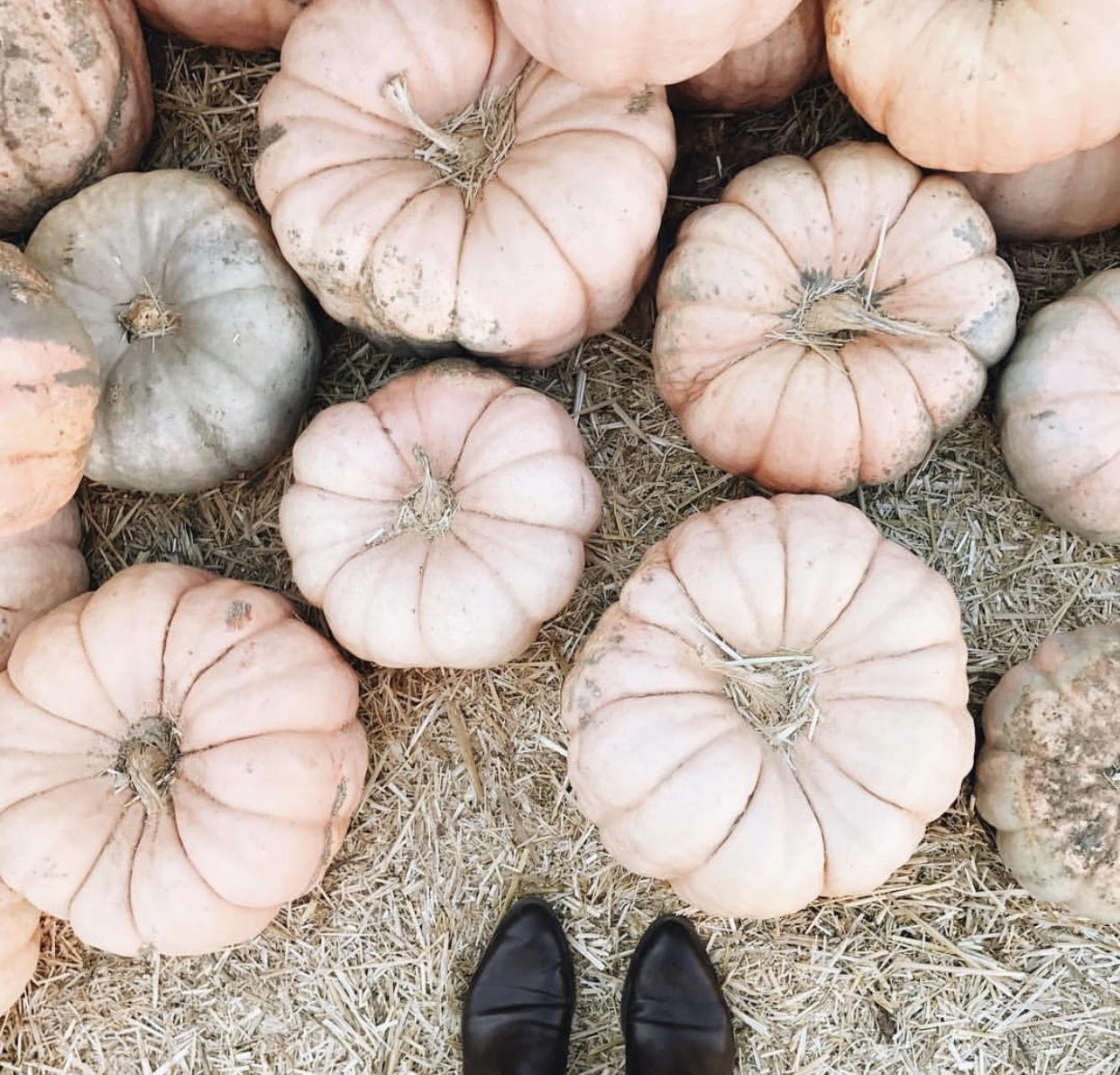 Searching for unique pumpkins  via Kayla Sampson