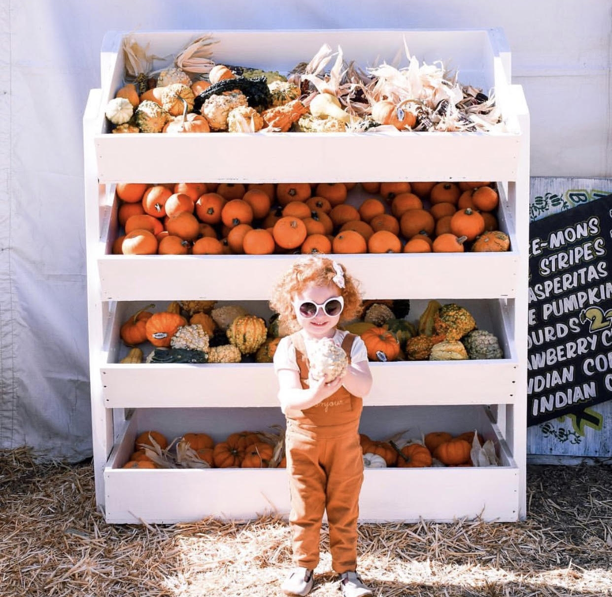 Pumpkin patch adventures  via Celeste Wright