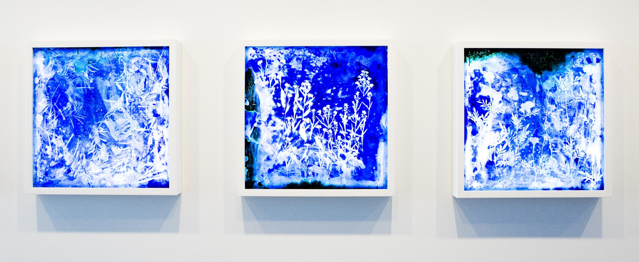 Cyanotype on Glass
