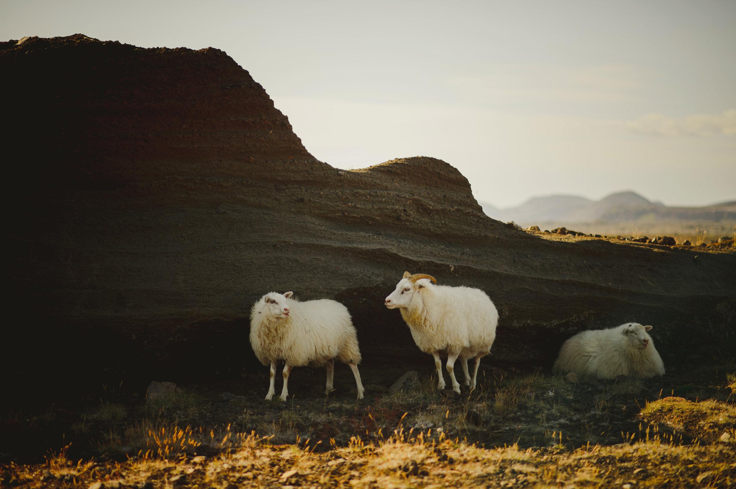 Iceland-Wedding-Photographer-MichaelChanPhotography-1.jpg