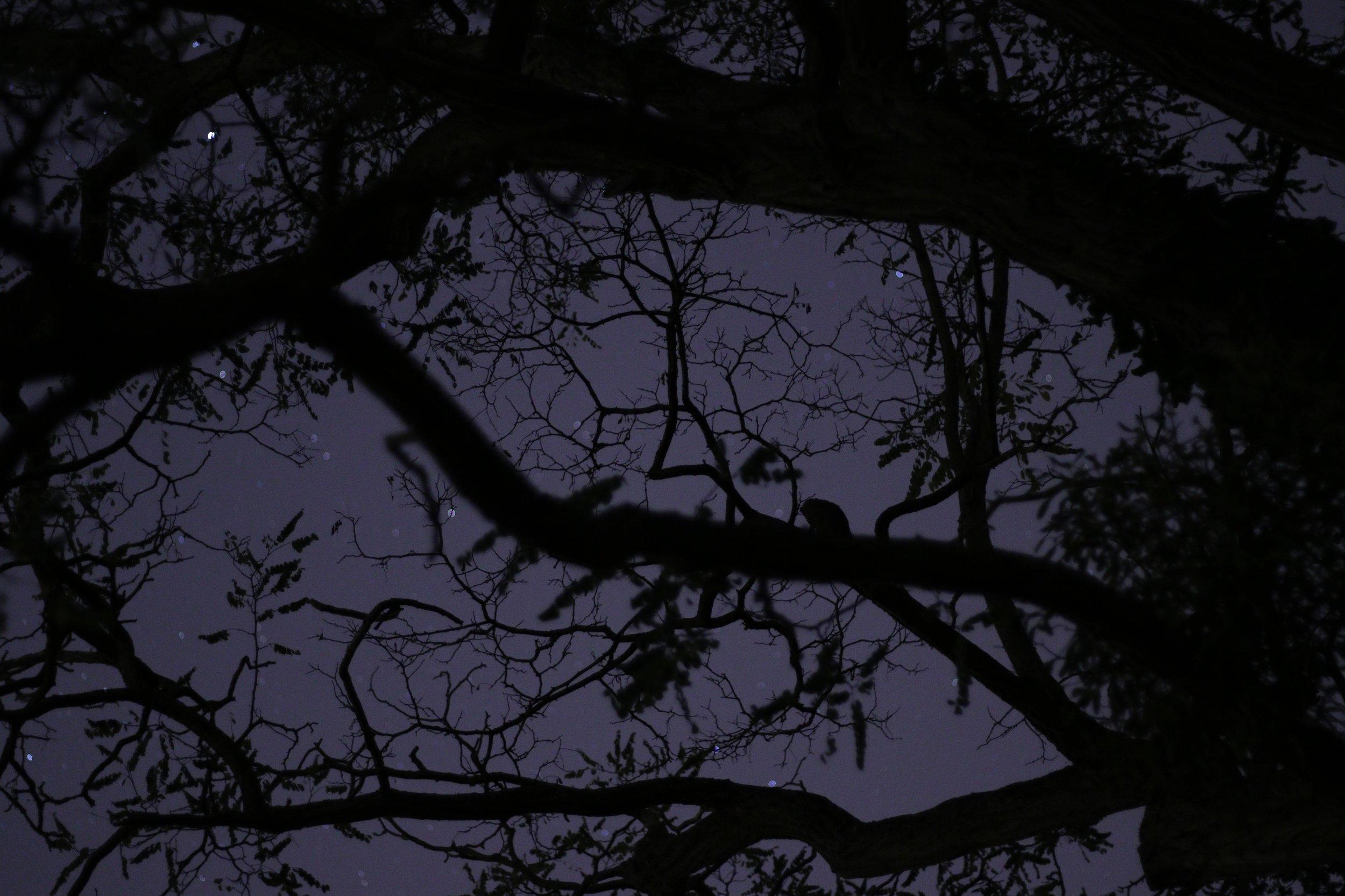 nicolas-saulnier-371794.jpg
