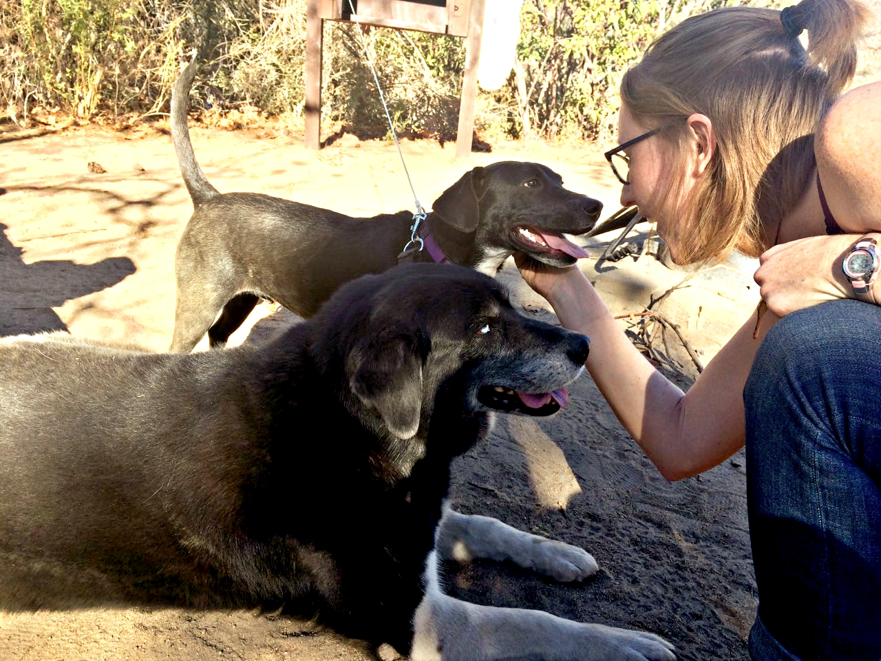 camping with dogs in california, rv camping with dogs, camping with dogs, tent camping with dogs, camping with dogs in san diego, camping with dogs tips