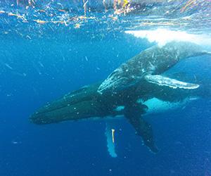 whale-song-dream-image-300x250px.jpg