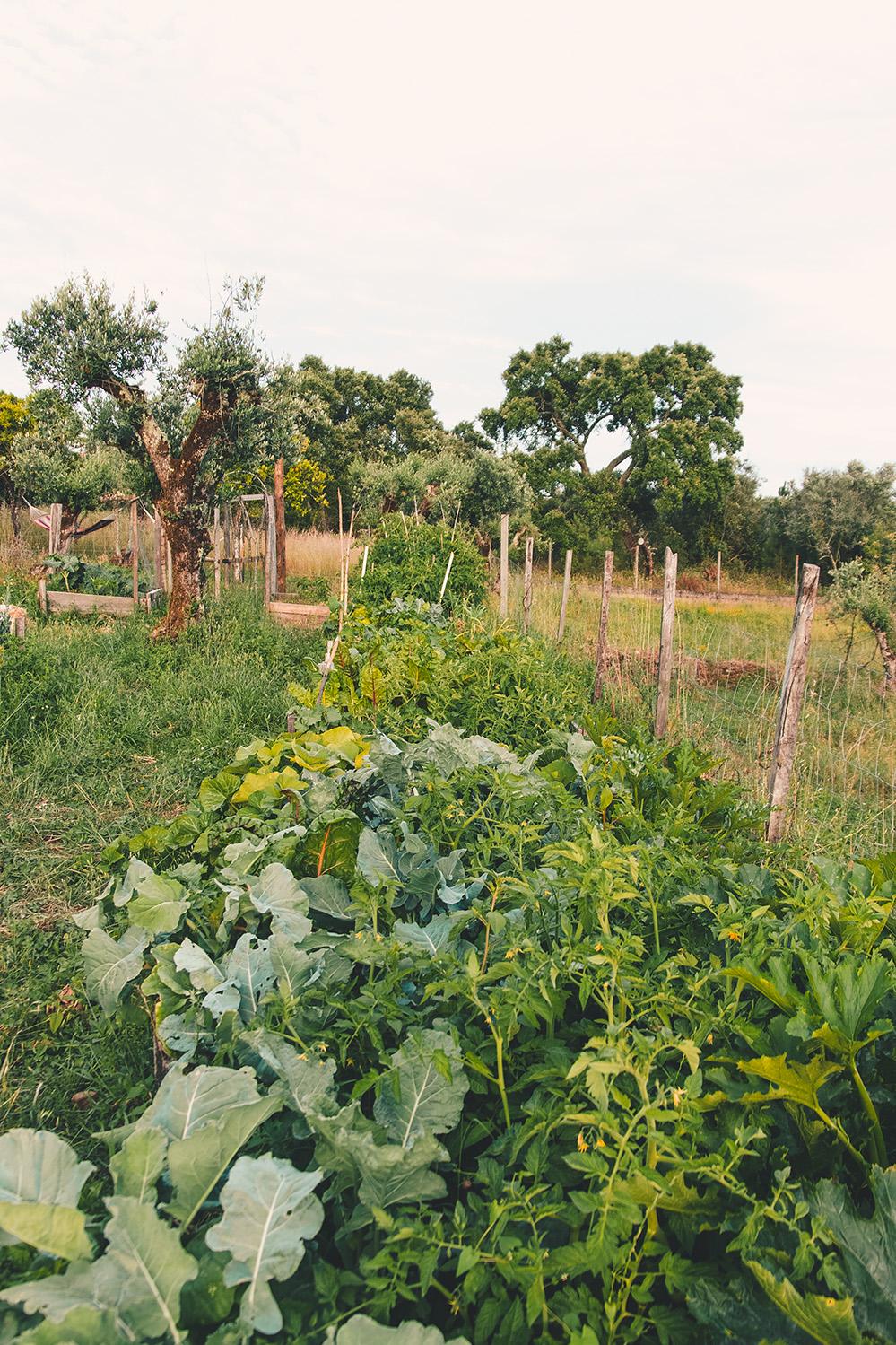 veg_garden_72.jpg