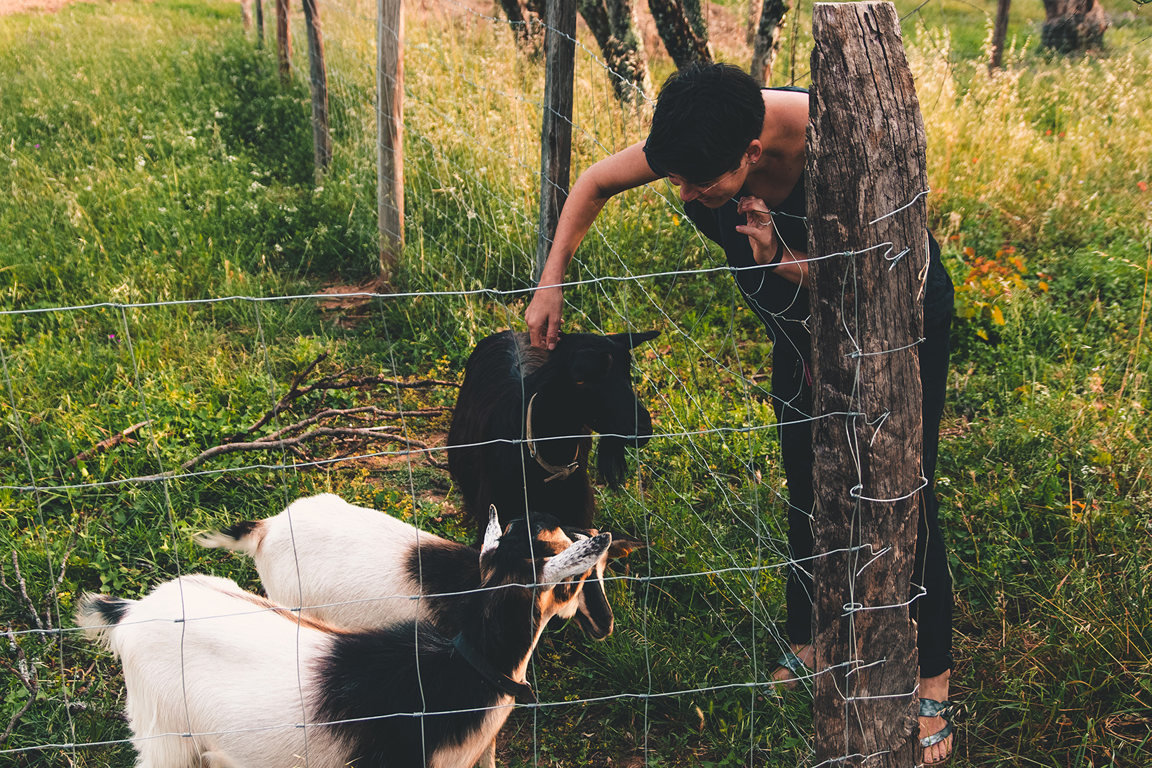Leyla_goats_72.jpg