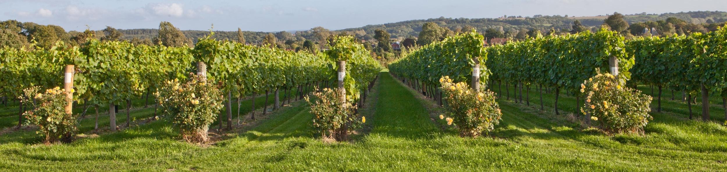 Vine Landscape.jpg