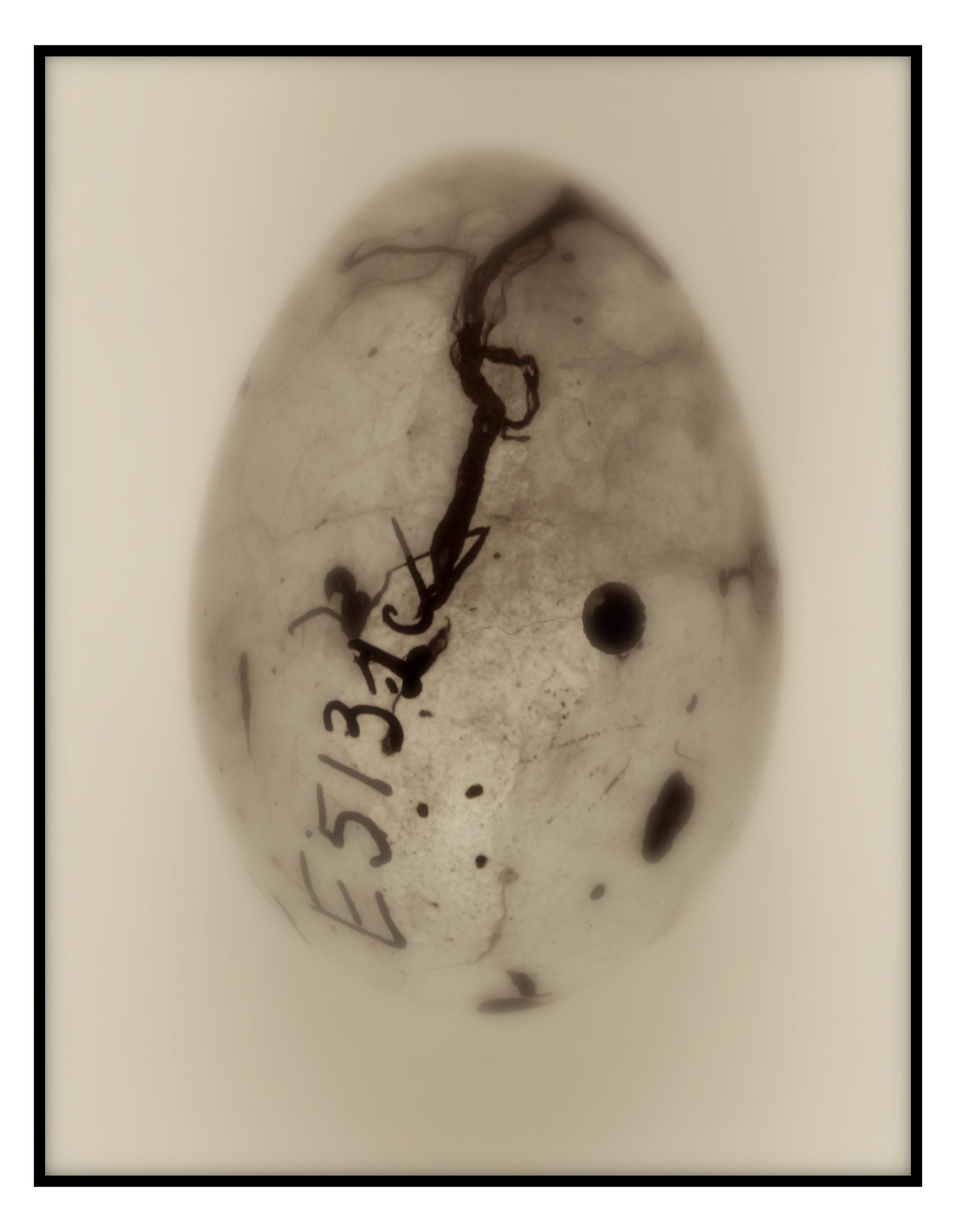 art egg grackle.JPG