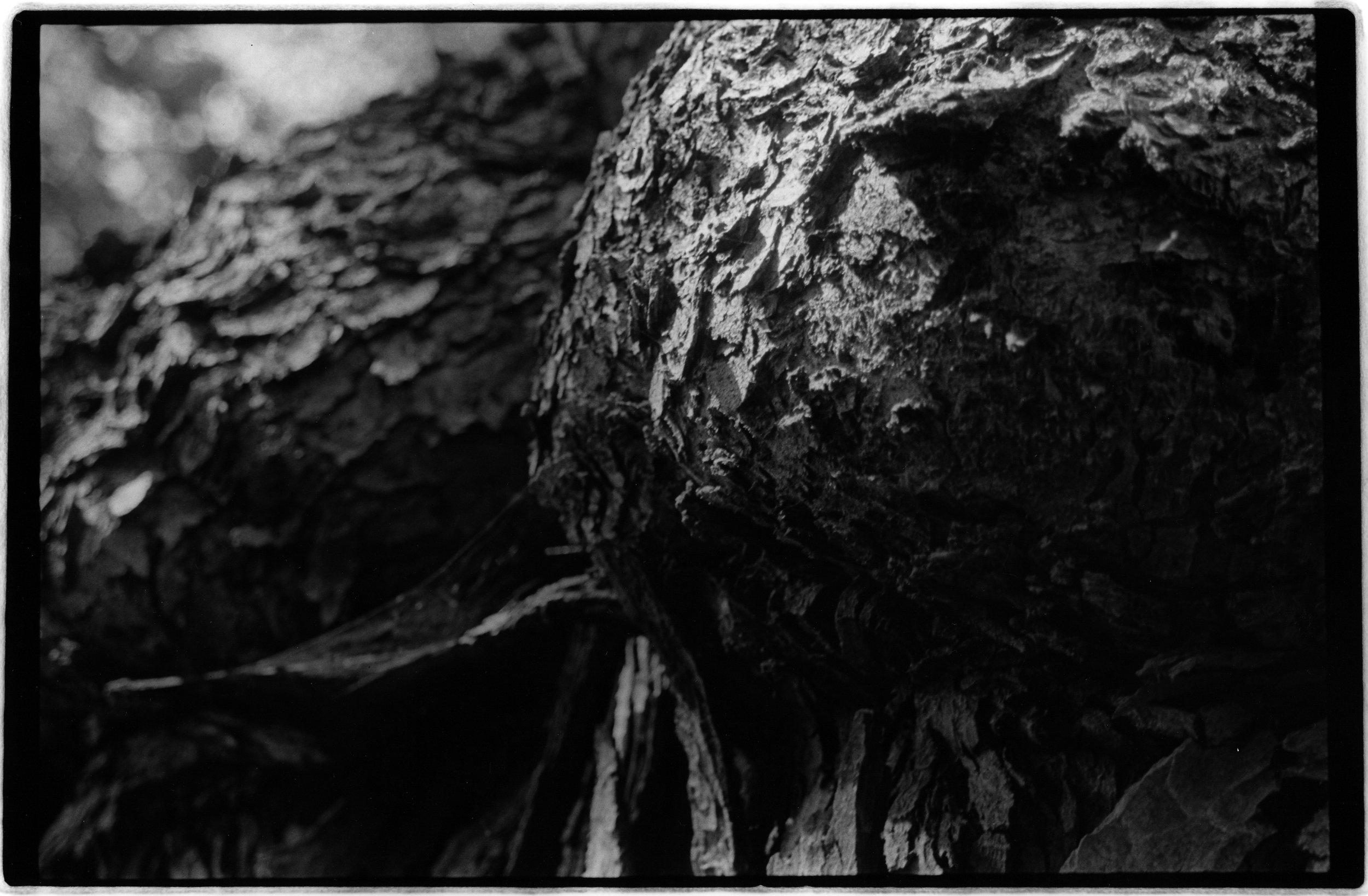 Tree Boils202.jpg