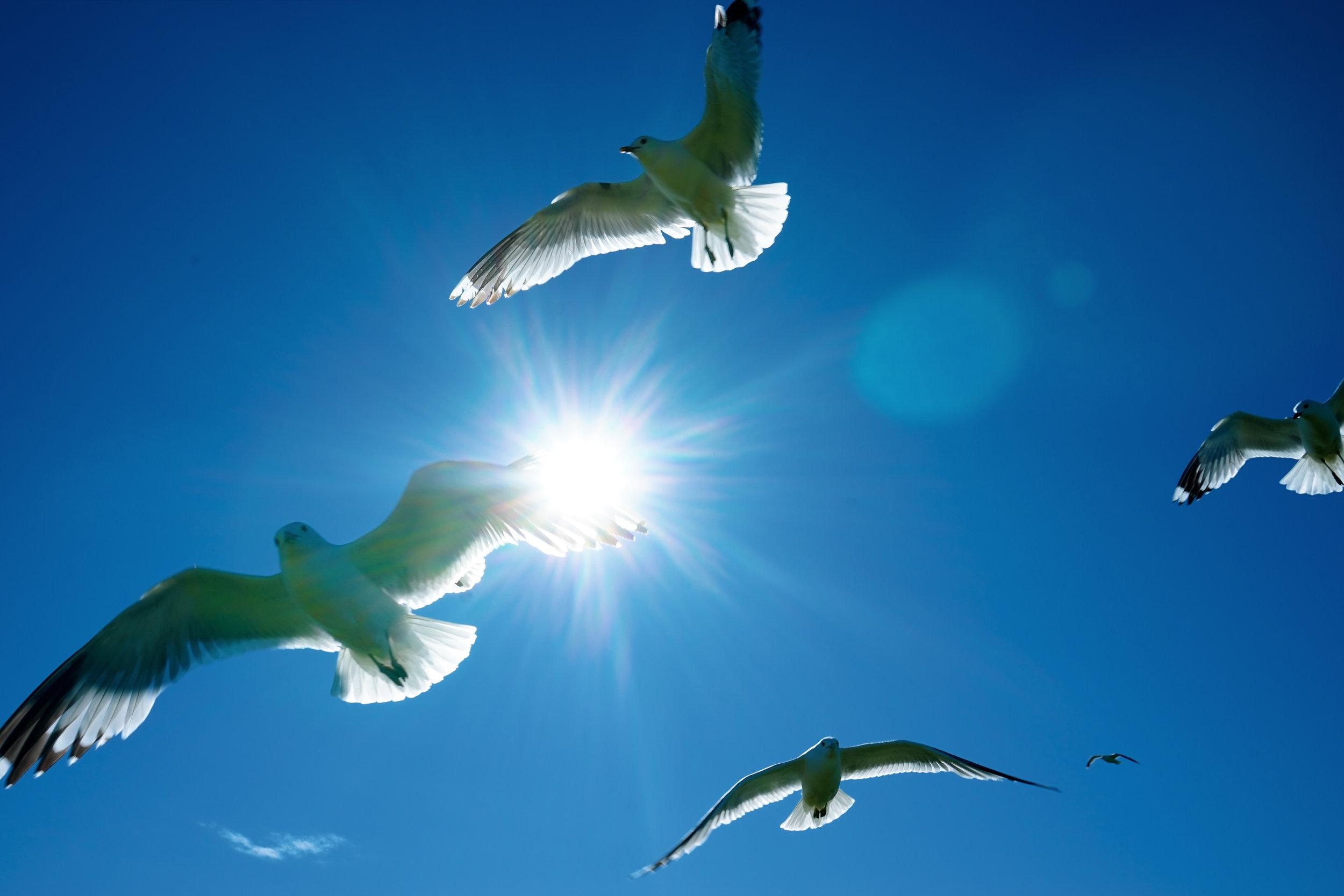 芬蘭堡四處都是海鷗自在飛翔的踪影。