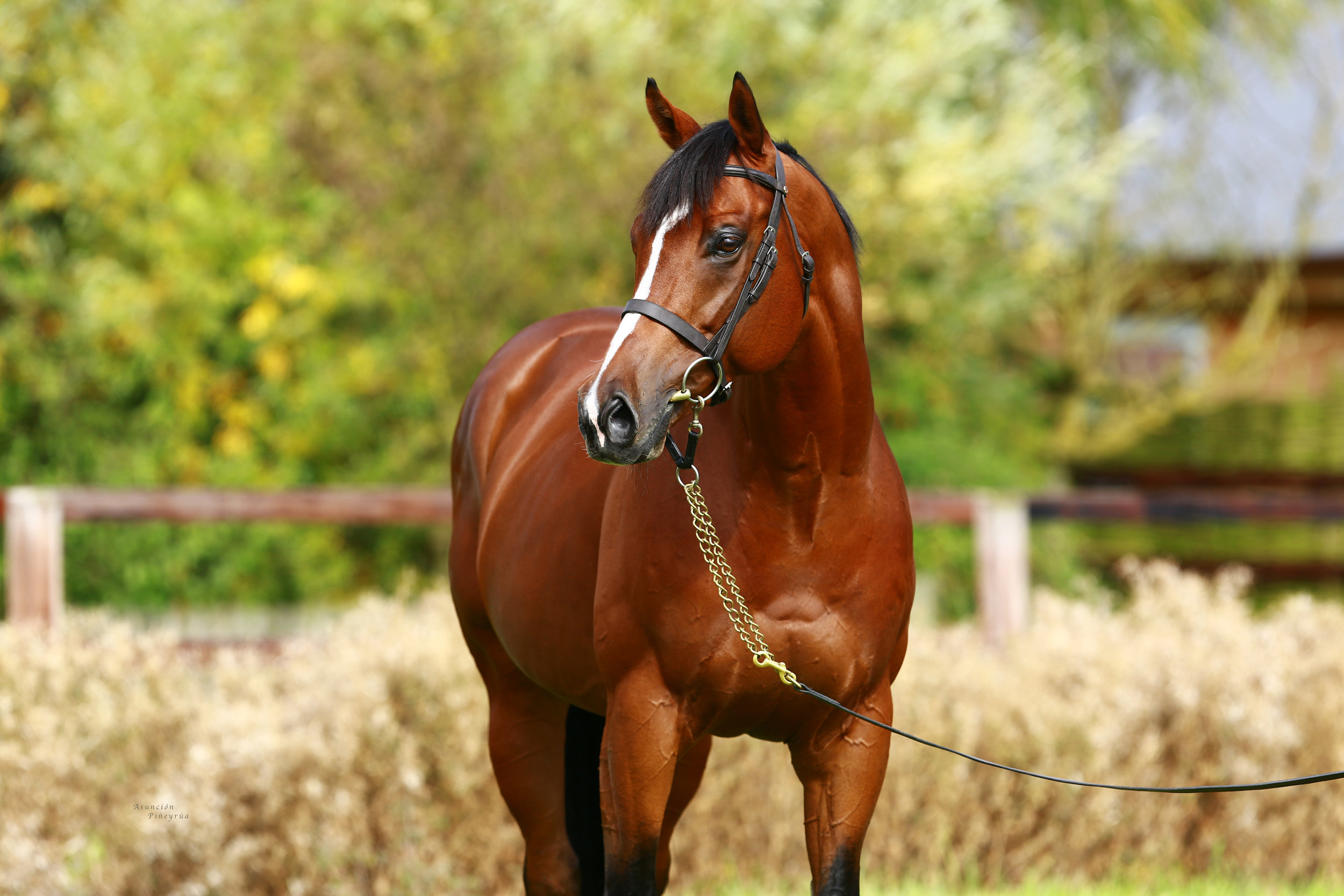 - OASIS DREAM ex INFALLIBLE 2010Standing at Hedgeholme Stud, Co. Durham - £1,750 (Travel allowance of up to £400 when paying full nomination fees)