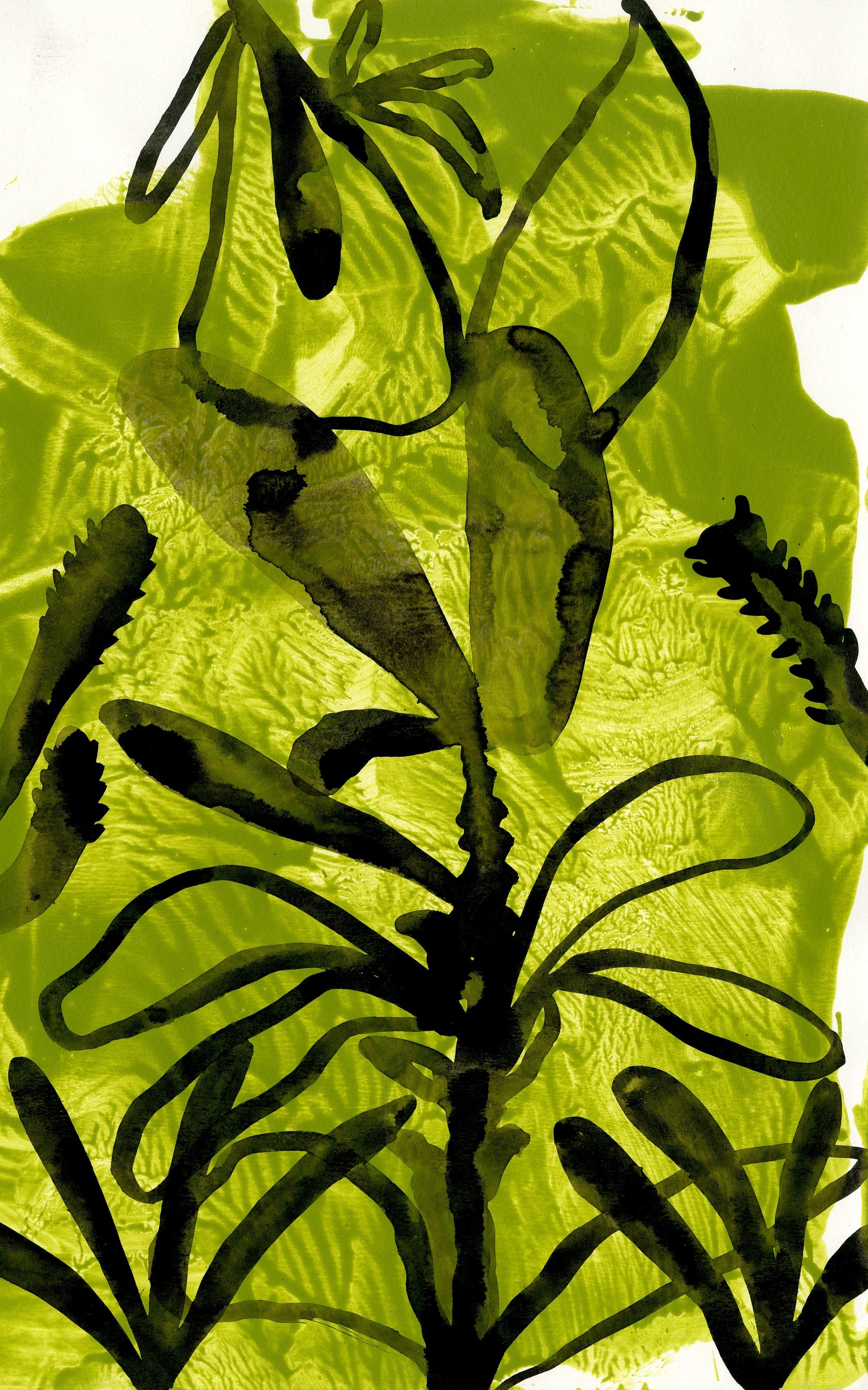 Chlorophyll tea VII
