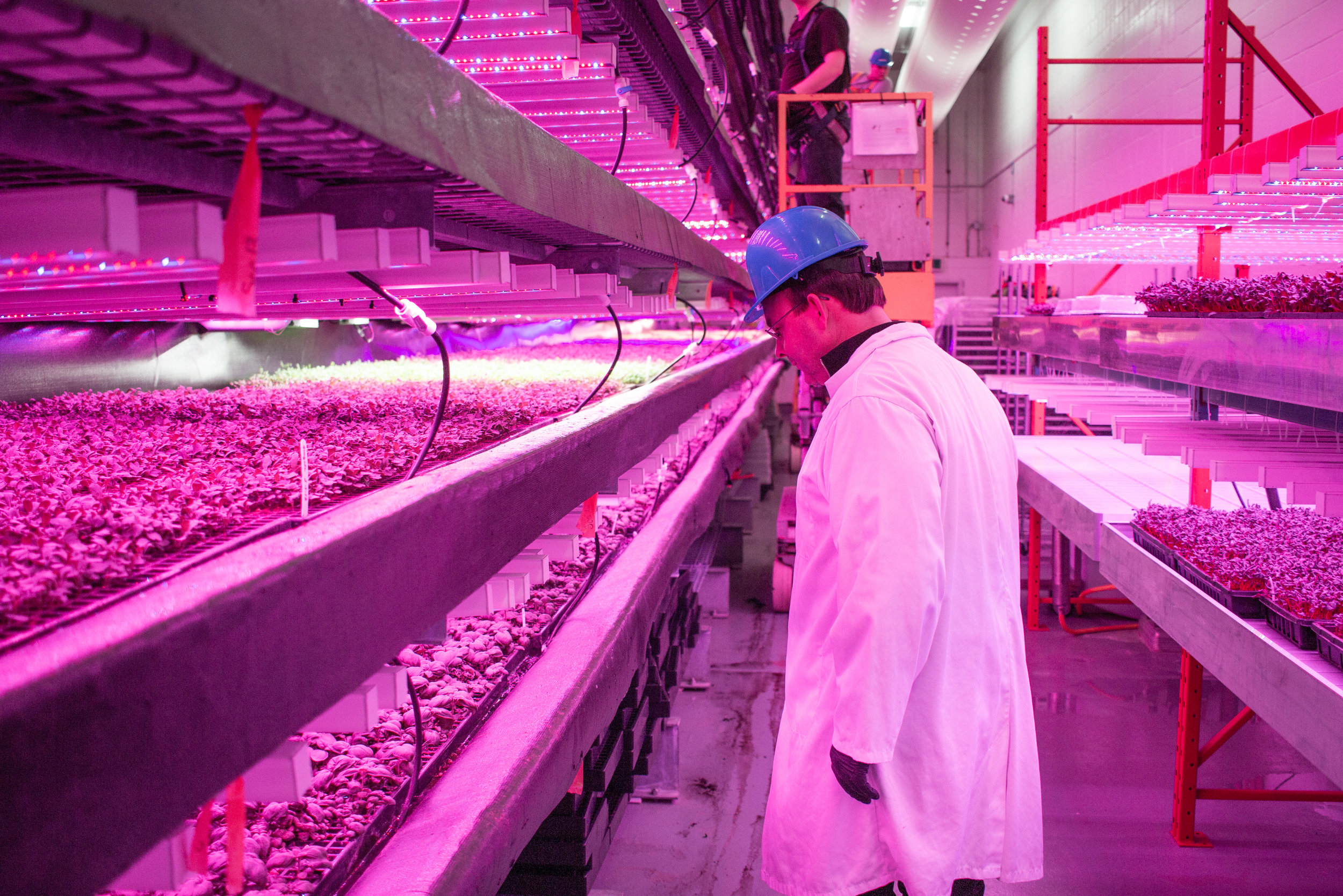 GoodLeaf Founder Gregg Curwin inspecting plants growing in GoodLeaf's pilot R&D facility in Bible Hill, Nova Scotia. (Early 2018)