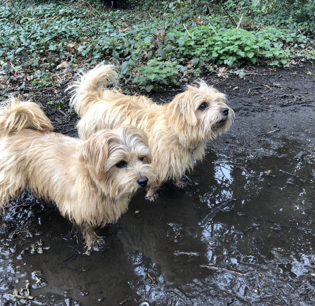 Reg and Bob on a wet, muddy walk
