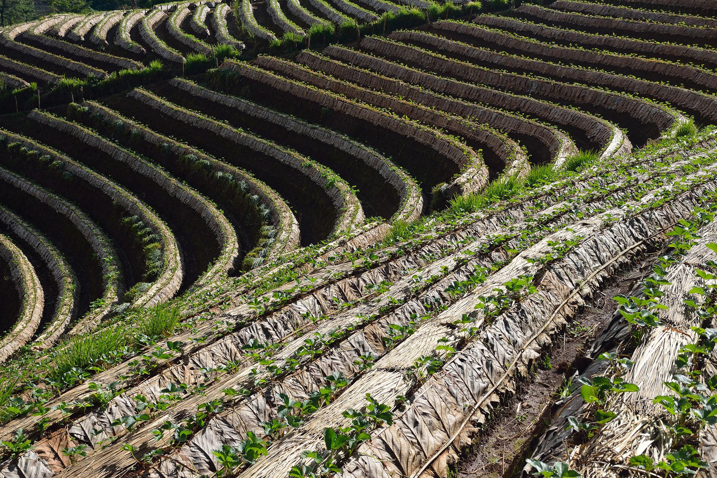 field-belairproduce.jpg