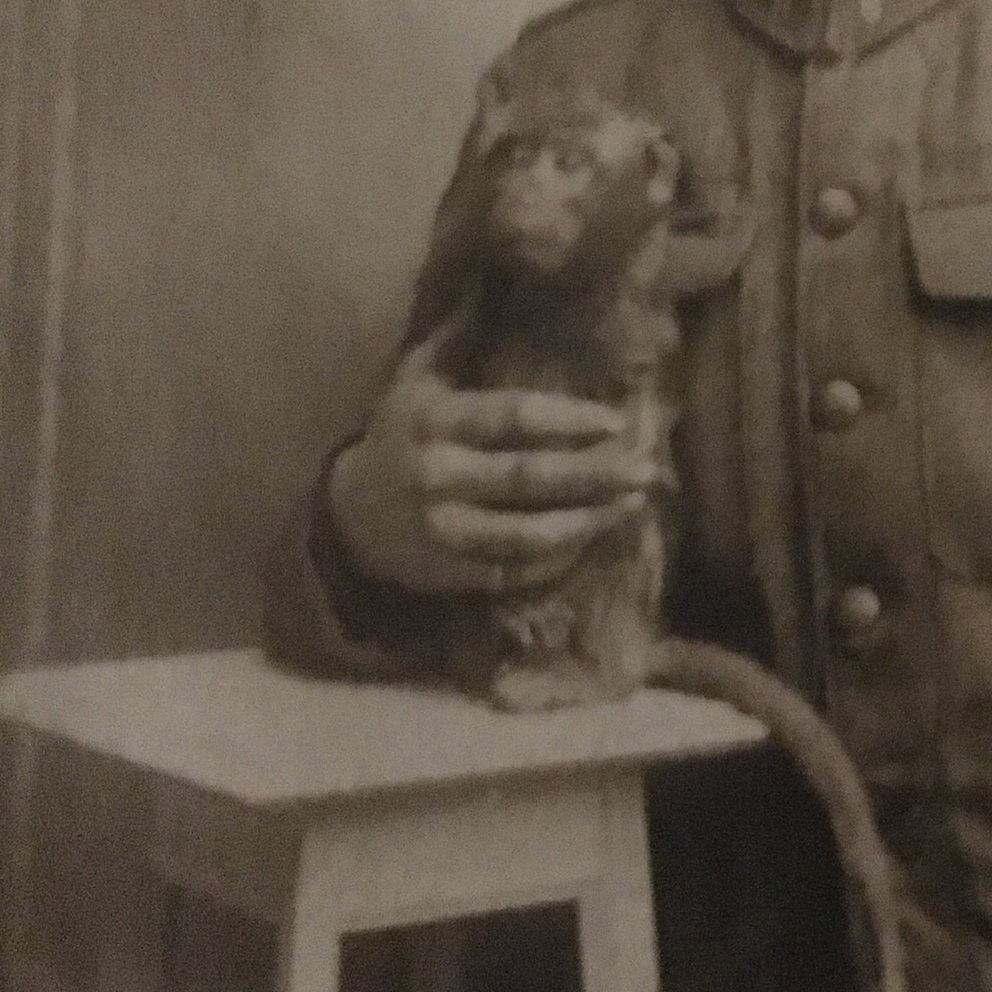 Wickey, 8th Battalion mascot (First World War) -