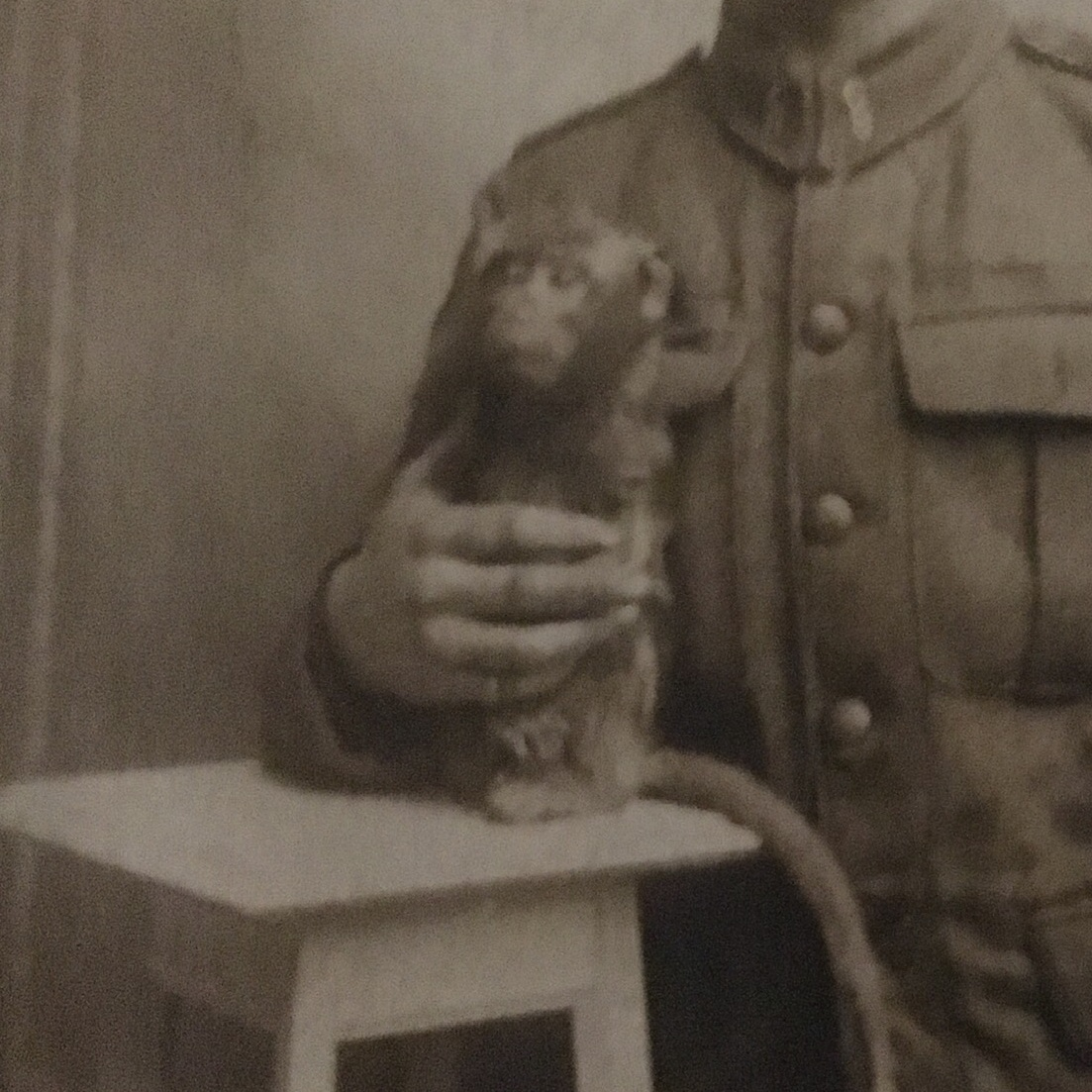 Wickey, 8th Battalion mascot (First World War) -