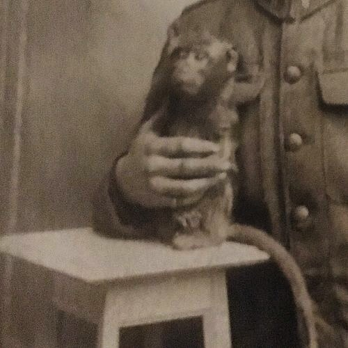We'd like to introduce you to Wickey, the 8th Battalion's mascot during the First World War. Read the true story of her life on the Front and back home in Winnipeg on our blog (www.rwrmuseum.com). #royalwinnipegrifles #winnipeghistory #manitobahistory #canadianhistory #canadianmilitaryhistory #ww1 #worldwar1 #firstworldwar #greatwar #wartoendallwars #mascots #mascot #monkey #monkeypower #simiansoldiers