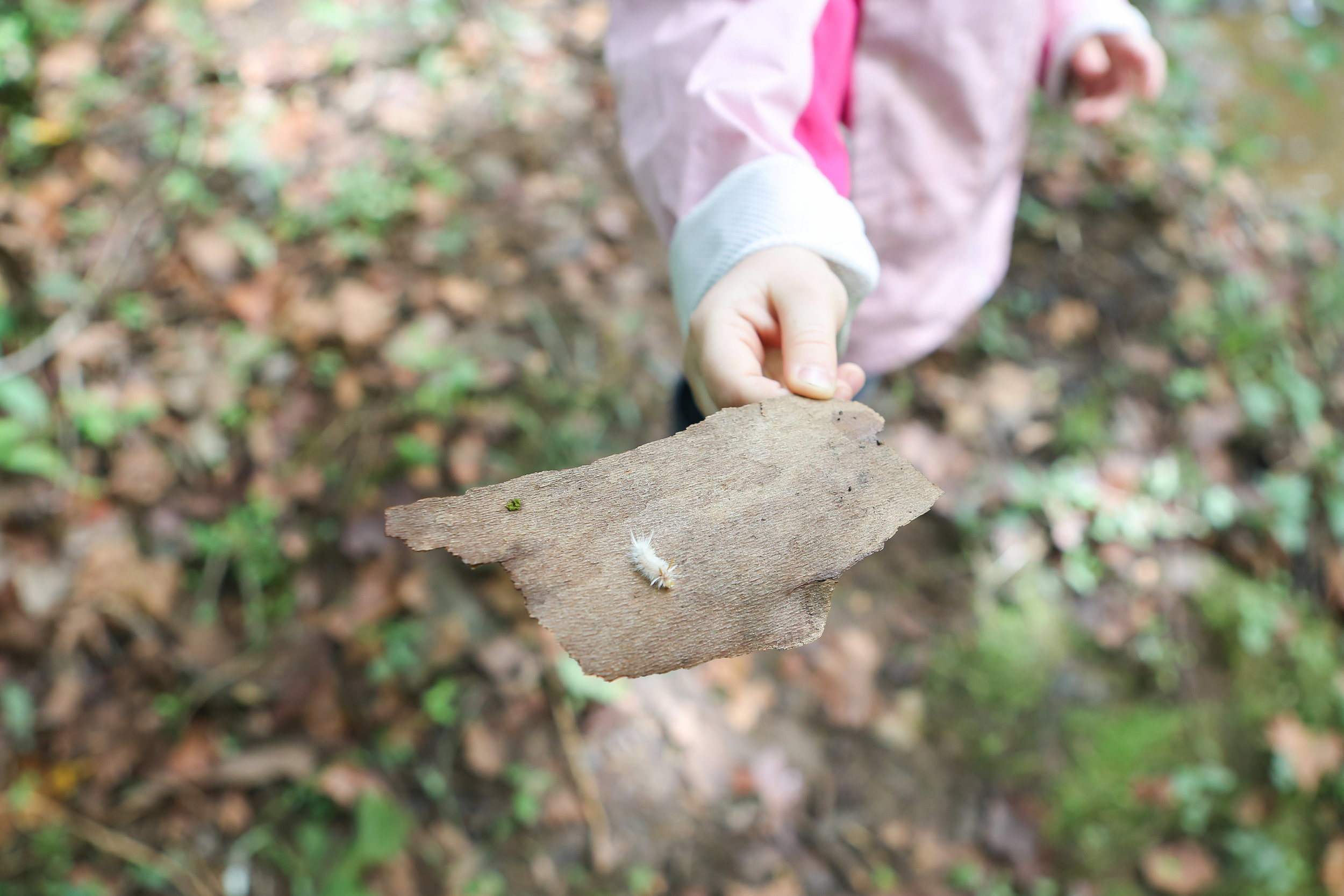 Forest School Finals-Forest School Finals-0102.jpg