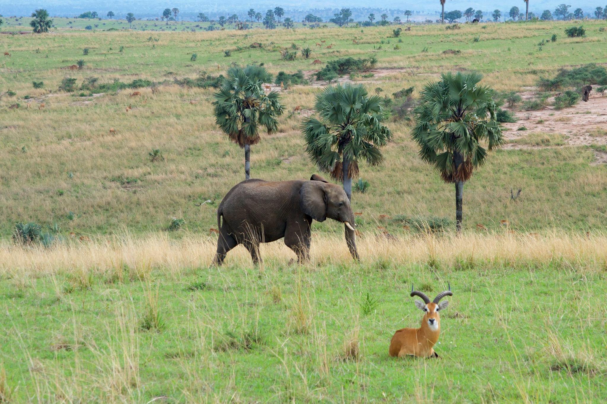 Paysage_elephant.jpg