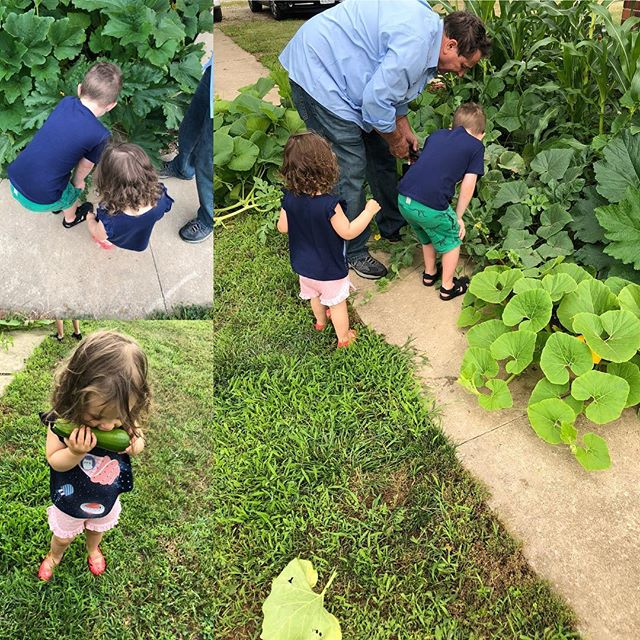 Helping Papa with his garden and doing a little taste testing!  #helpingpapa #gardening #healthyfamily #cleaneating #freshzucchini