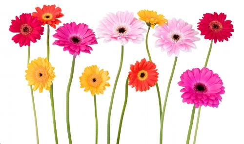 ori-stickers-fleur-10324_348.jpg