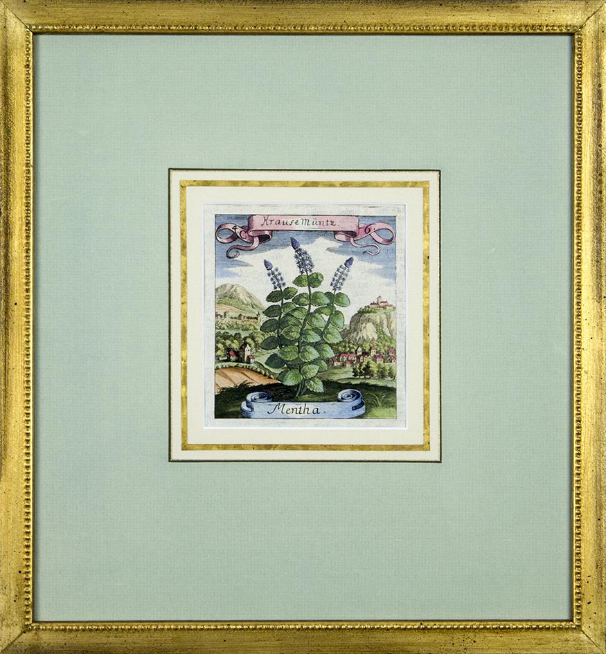 """Antique Botanical - 14"""" x 14 3/4"""" framed"""