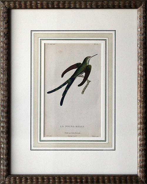 """P. Lesson, """"Oiseaex-Mouches."""" Paris, first edition - 1829 - original color copper engraving"""
