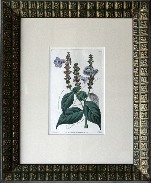 William Curtis: Curtis Botanical Magazine, London, England - 1787-1817 - Hand-colored engraving