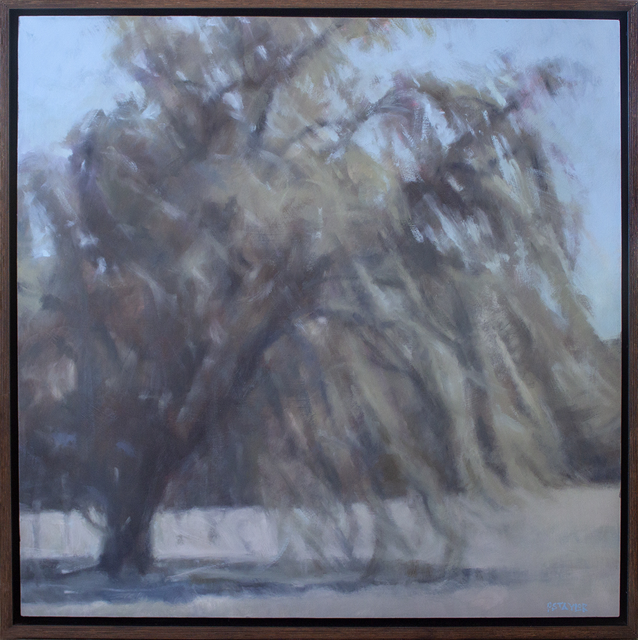 "Windy Willow - 30"" x 30"" - oil on canvas"