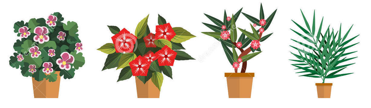 vector-set-flowers-illustration-different-types-pot-flower-icons-isolated-white-background-71844294 copy.jpg