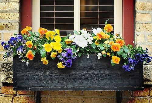 flowers-windows-boxes.jpg
