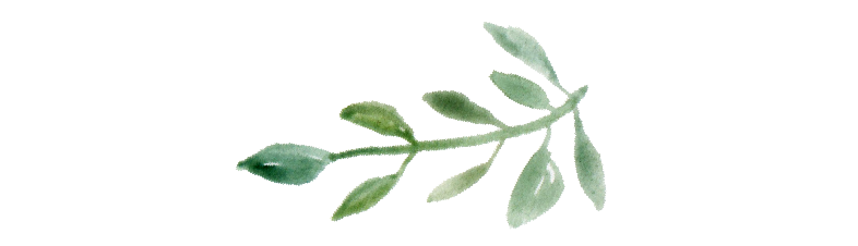 small leaf-01.png