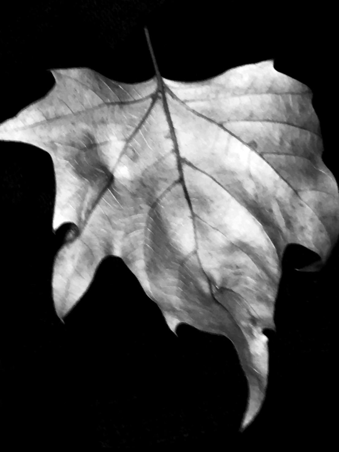 Leaf1X.jpg